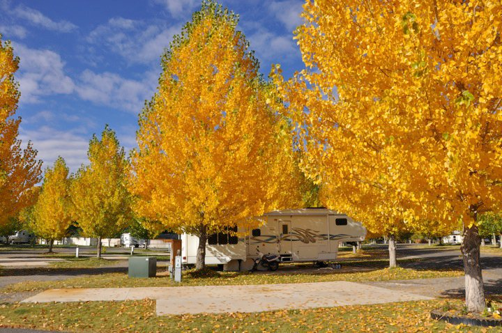 Colorado Camping & Stunning Aspen Leaves