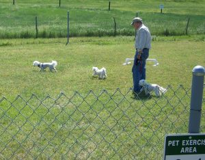 Camping with pets at Colorado RV parks and campgrounds