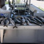 Yes, we do have fish! ~ Blue Mesa Escape, near Gunnison CO