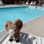 Cool off in the pool at Colorado Springs South KOA!