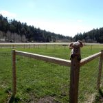 Dog run at Aspen Acres Campground in Rye Colorado