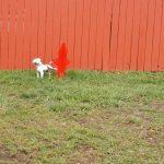 Dog run pet area at Circle the Wagon RV Park (La Veta CO)