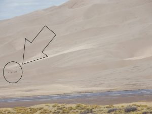 Zoomed in & marked to show people at Great Sand Dunes National Park, near Alamosa CO