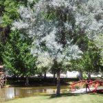 Uncompahgre River RV Park in Olathe Colorado