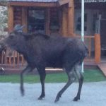 Wildlife experiences up close and personal in Lake City at Highlander RV Campground