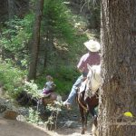 A guided horse ride is fun for the whole family and not to be missed! ~ Cutty's Hayden Creek Resort (Coaldale Colorado)