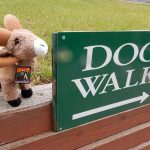 Dogs have their own 'Walk' at Goldfield RV Park in Colorado Springs
