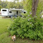Lots of trees throughout Westerly RV Park!